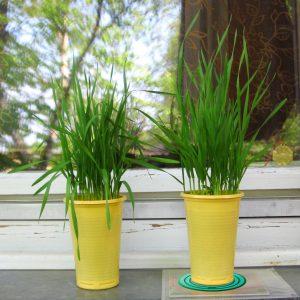 CosmoCure y plantas